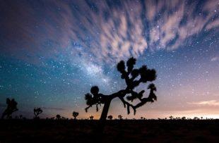 joshua-tree-stars